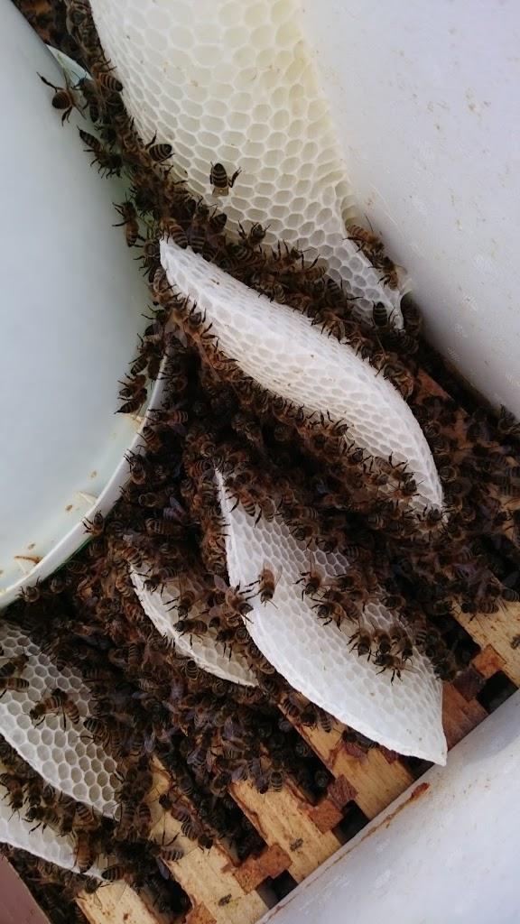 Mesimahojen ruokintaa ja pohjien vaihtoa